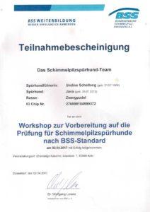 BSS Fortbildung Workshop Schimmel Spürhund