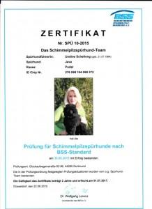 Prüfung für Schimmelpilzspürhunde nach BSS-Standard