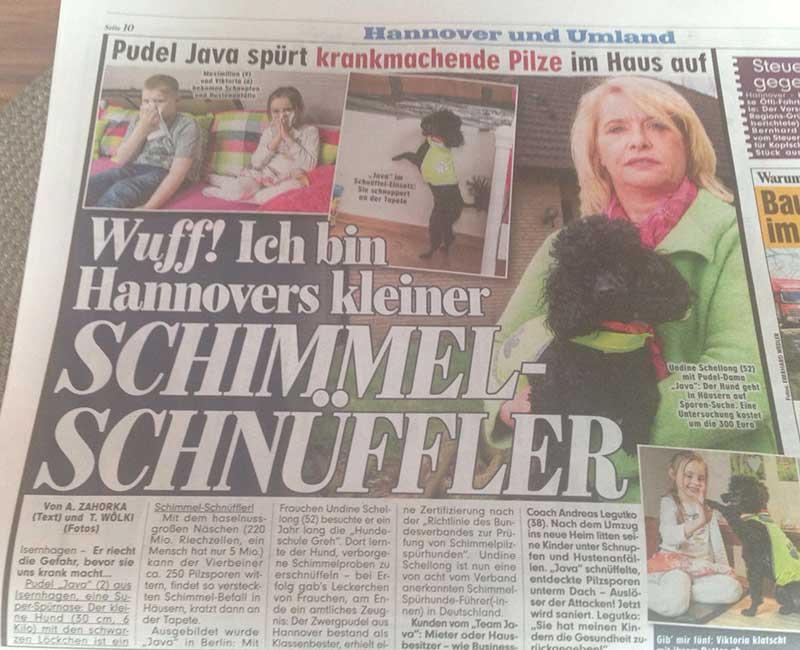 BILD Zeitung Schimmelpilz Spürhund