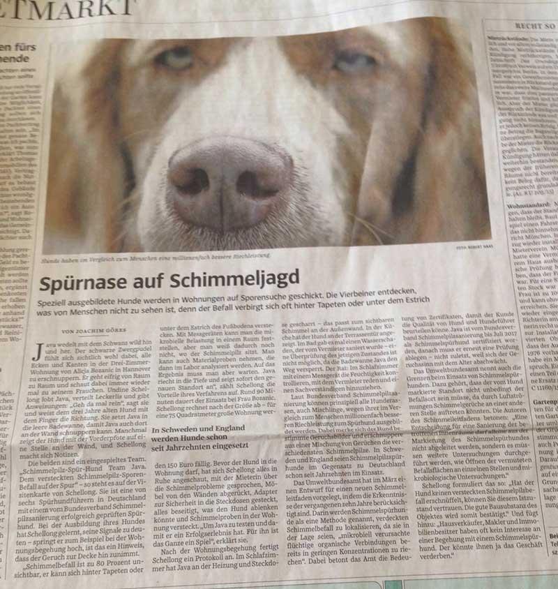 SZ-Zeitung Schimmelpil Spürhund Team Java