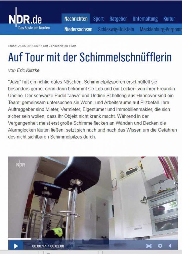 TeamJava-Schimmepilz-Spürhund-Hannover-NDR